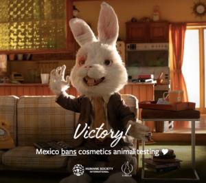 mexico-bans-animal-testing
